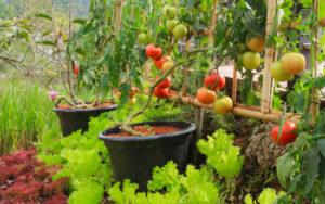grow produce