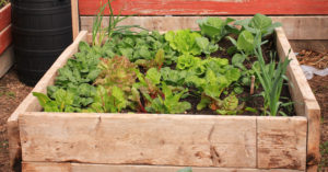 How to Grow Your Own Organic Produce and Enjoy Veggies All Summer Long